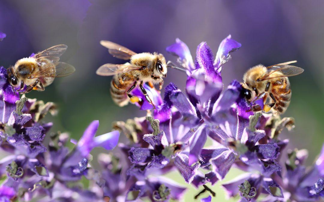 Mehr als nur ein Summen – zu den Volksinitiativen zum Insektenschutz