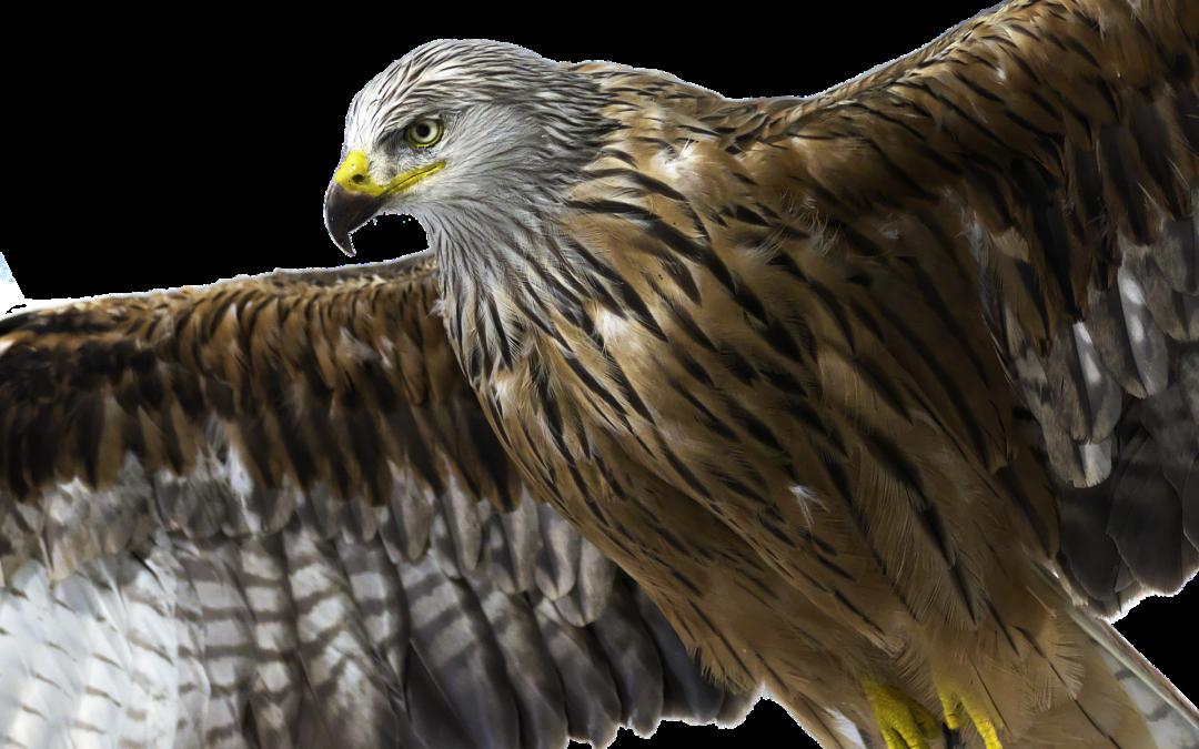 Antrag zum Schutz der heimischen Greifvögel abgelehnt
